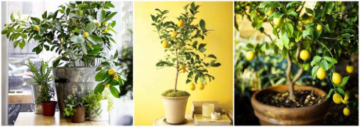 como plantar en macetas. interesting reproduccin de fresas en