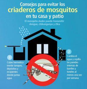 dengue evite criaderos de mosquitos