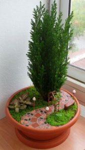 mini jardin maceta