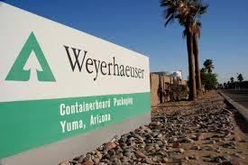 weyerhausen cartel