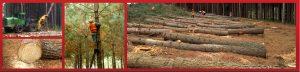 frutifor_productos_madera_aserrada